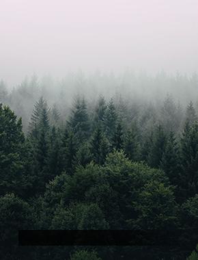 Студенты-добровольцы СурГУ приняли участие в ликвидации лесных пожаров
